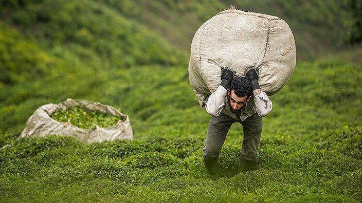کشاورز ایرانی؛ تنهای تنهای تنها